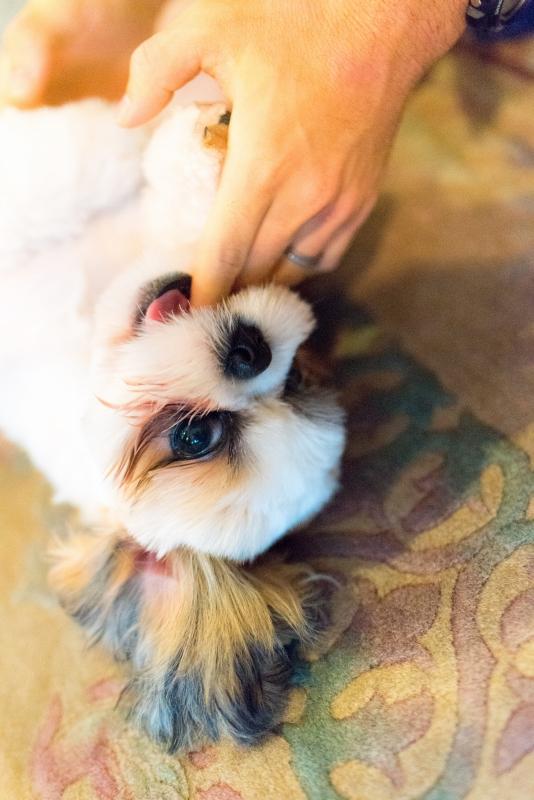 犬との記念写真なら口コミで広まっている出張撮影タイプの写真スタジオ「ペットショット」にお任せdog-photo-0180