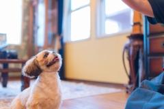 犬との記念写真なら口コミで広まっている出張撮影タイプの写真スタジオ「ペットショット」にお任せdog-photo-0140