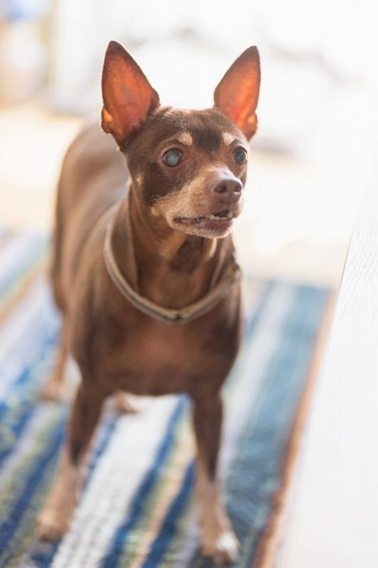 犬と一緒に記念写真を撮影できる出張タイプの写真スタジオ【ペットショット】dog-photo-0033
