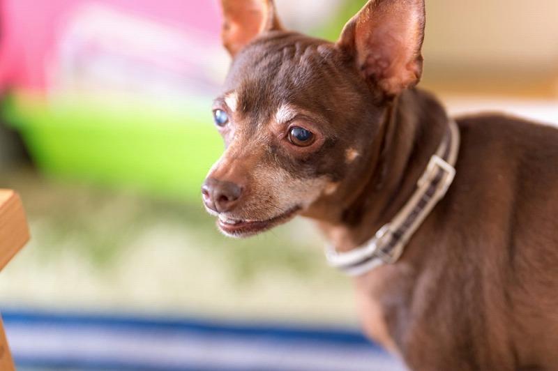 犬と一緒に記念写真を撮影できる出張タイプの写真スタジオ【ペットショット】dog-photo-0042