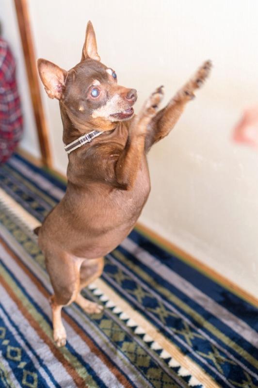犬と一緒に記念写真を撮影できる出張タイプの写真スタジオ【ペットショット】dog-photo-0043