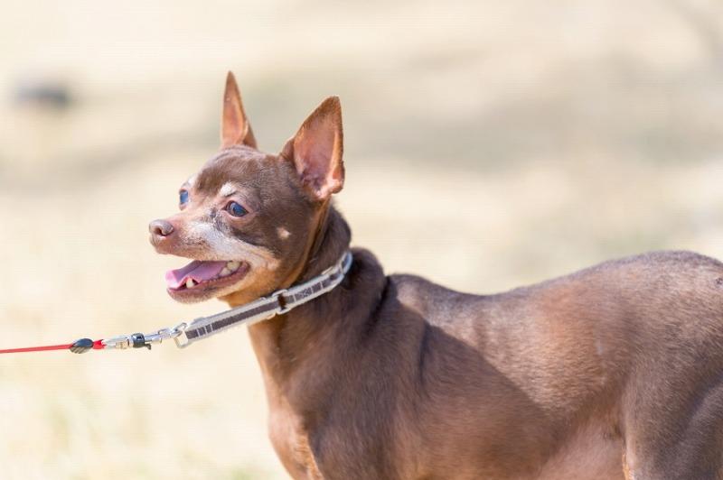 犬と一緒に記念写真を撮影できる出張タイプの写真スタジオ【ペットショット】dog-photo-0046