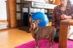 犬と一緒に記念写真を撮影できる出張タイプの写真スタジオ【ペットショット】dog-photo-0032