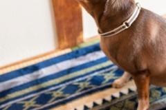 d犬と一緒に記念写真を撮影できる出張タイプの写真スタジオ【ペットショット】og-photo-0034