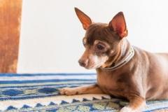 犬と一緒に記念写真を撮影できる出張タイプの写真スタジオ【ペットショット】dog-photo-0036