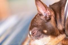 犬と一緒に記念写真を撮影できる出張タイプの写真スタジオ【ペットショット】dog-photo-0038