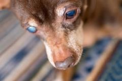 犬と一緒に記念写真を撮影できる出張タイプの写真スタジオ【ペットショット】dog-photo-0039