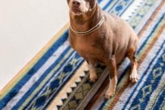 犬と一緒に記念写真を撮影できる出張タイプの写真スタジオ【ペットショット】dog-photo-0040