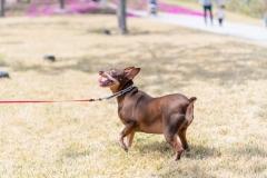 犬と一緒に記念写真を撮影できる出張タイプの写真スタジオ【ペットショット】dog-photo-0045