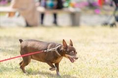 犬と一緒に記念写真を撮影できる出張タイプの写真スタジオ【ペットショット】dog-photo-0048