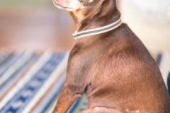 犬と一緒に記念写真を撮影できる出張タイプの写真スタジオ【ペットショット】dog-photo-0049