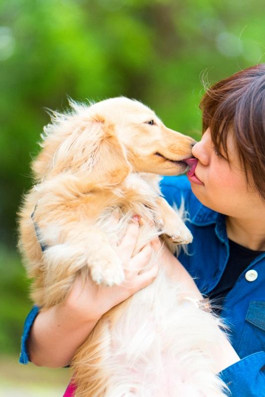 犬との記念撮影・出張撮影ならペットショットdog010-001