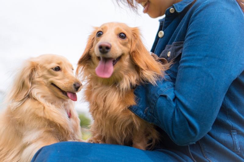 犬との記念撮影・出張撮影ならペットショットdog010-002