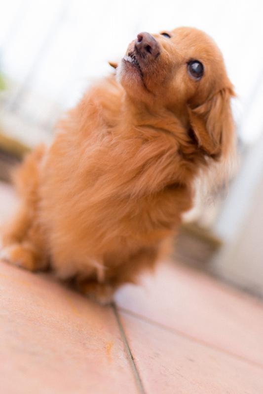 犬との記念撮影・出張撮影ならペットショットdog010-008