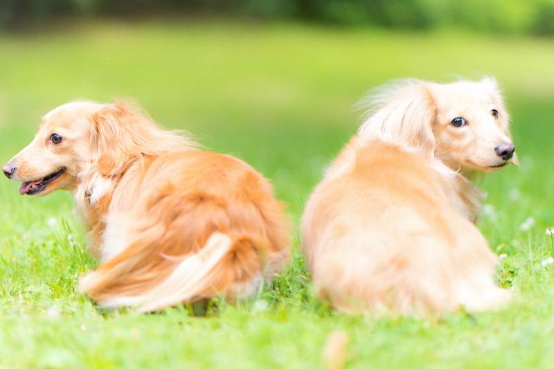 犬との記念撮影・出張撮影ならペットショットdog010-010