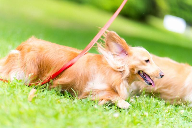 犬との記念撮影・出張撮影ならペットショットdog010-011