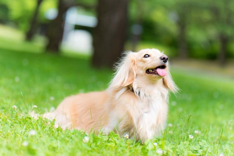 犬との記念撮影・出張撮影ならペットショットdog010-012