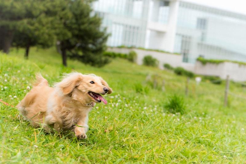 犬との記念撮影・出張撮影ならペットショットdog010-014