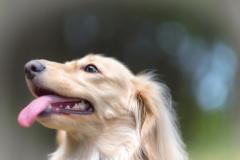 犬との記念撮影・出張撮影ならペットショットdog010-005