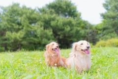 犬との記念撮影・出張撮影ならペットショットdog010-006