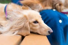 犬との記念撮影・出張撮影ならペットショットdog010-007