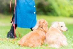 犬との記念撮影・出張撮影ならペットショットdog010-009