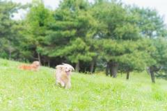 犬との記念撮影・出張撮影ならペットショットdog010-013