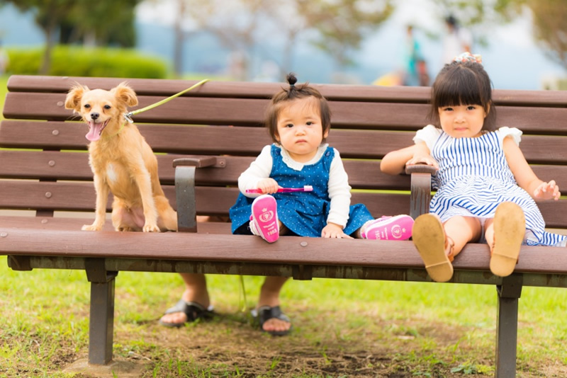 猫と⼀緒に記念写真を撮影できる出張タイプの写真スタジオ【ペットショット】dog-011-002