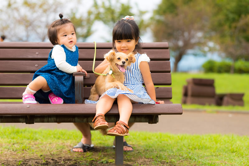 猫と⼀緒に記念写真を撮影できる出張タイプの写真スタジオ【ペットショット】dog-011-005