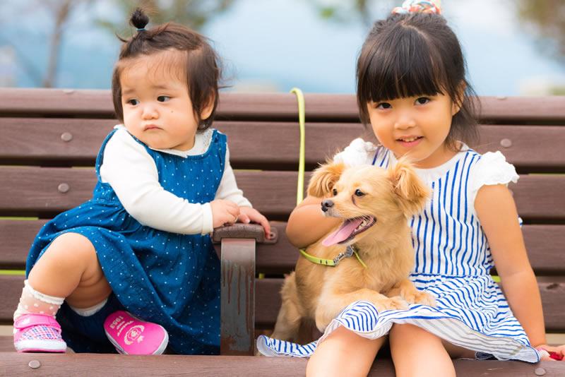猫と⼀緒に記念写真を撮影できる出張タイプの写真スタジオ【ペットショット】dog-011-006