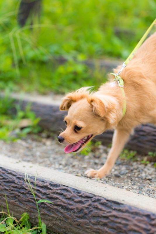 猫と⼀緒に記念写真を撮影できる出張タイプの写真スタジオ【ペットショット】dog-011-008