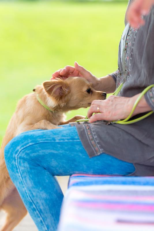 猫と⼀緒に記念写真を撮影できる出張タイプの写真スタジオ【ペットショット】dog-011-010