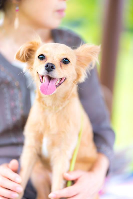猫と⼀緒に記念写真を撮影できる出張タイプの写真スタジオ【ペットショット】dog-011-011