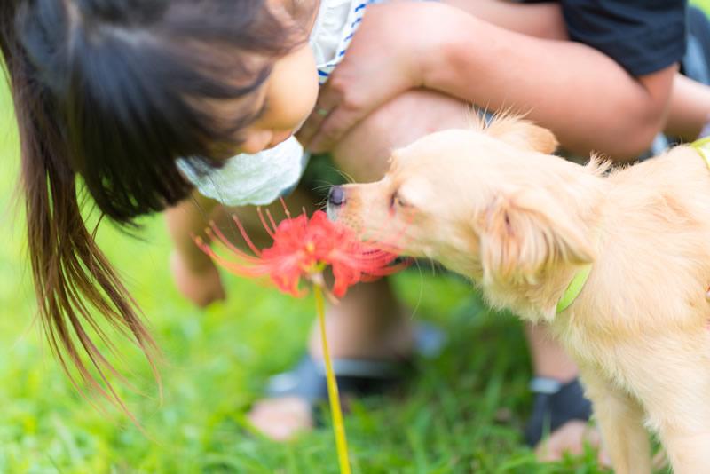 猫と⼀緒に記念写真を撮影できる出張タイプの写真スタジオ【ペットショット】dog-011-012