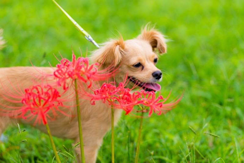 猫と⼀緒に記念写真を撮影できる出張タイプの写真スタジオ【ペットショット】dog-011-014