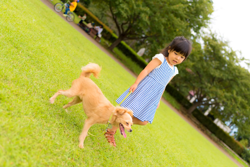 猫と⼀緒に記念写真を撮影できる出張タイプの写真スタジオ【ペットショット】dog-011-015