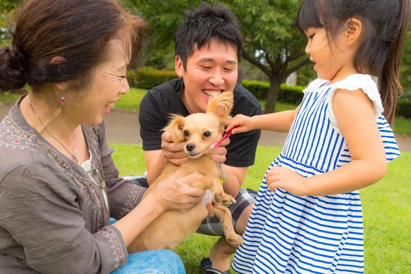 猫と⼀緒に記念写真を撮影できる出張タイプの写真スタジオ【ペットショット】dog-011-019