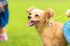 猫と⼀緒に記念写真を撮影できる出張タイプの写真スタジオ【ペットショット】dog-011-007
