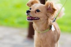 猫と⼀緒に記念写真を撮影できる出張タイプの写真スタジオ【ペットショット】dog-011-009