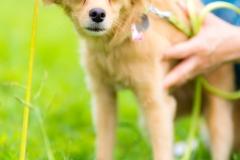 猫と⼀緒に記念写真を撮影できる出張タイプの写真スタジオ【ペットショット】dog-011-013