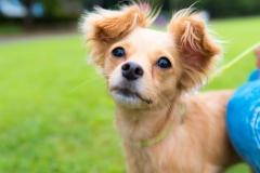 猫と⼀緒に記念写真を撮影できる出張タイプの写真スタジオ【ペットショット】dog-011-016