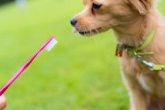 猫と⼀緒に記念写真を撮影できる出張タイプの写真スタジオ【ペットショット】dog-011-018