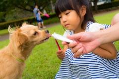 猫と⼀緒に記念写真を撮影できる出張タイプの写真スタジオ【ペットショット】dog-011-021