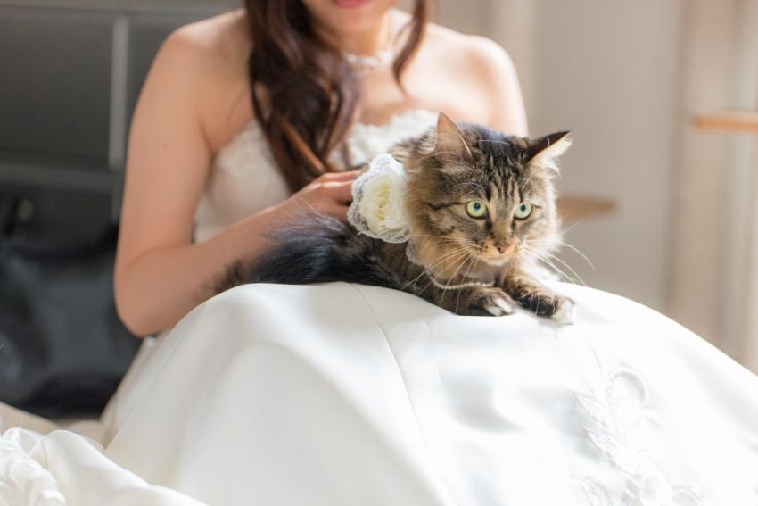 猫と一緒に記念写真を撮影できる出張タイプの写真スタジオ【ペットショット】cat-photo007