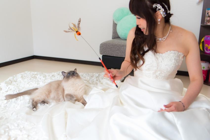猫と一緒に記念写真を撮影できる出張タイプの写真スタジオ【ペットショット】cat-photo011