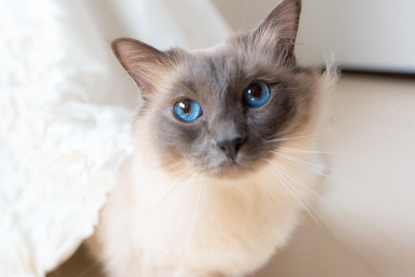 猫と一緒に記念写真を撮影できる出張タイプの写真スタジオ【ペットショット】cat-photo018