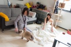 猫と一緒に記念写真を撮影できる出張タイプの写真スタジオ【ペットショット】cat-photo015