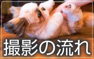 犬・ネコ写真の記念写真・出張撮影の流れ