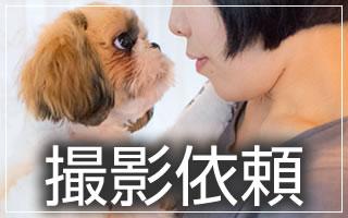 恋するペットアルバム「petshot」への記念写真・出張撮影の依頼