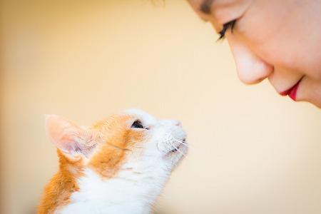 猫との記念写真、出張撮影ならペットショット